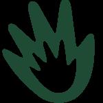 Fundação Jalles Machado